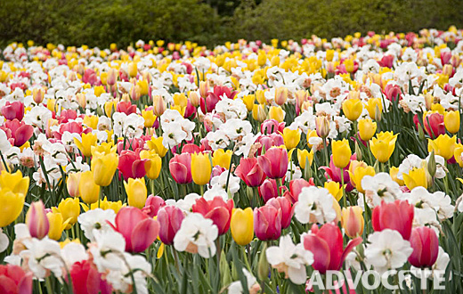 Dallas Blooms at the Dallas Arboretum is the perfect backdrop for the Food and Wine Festival.