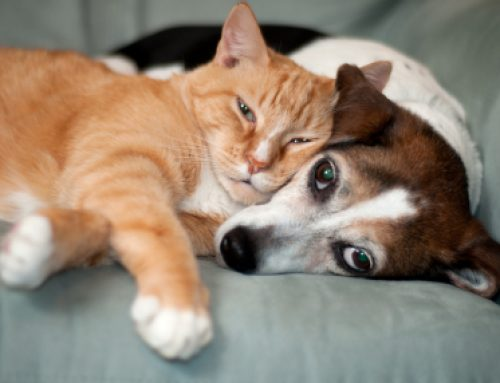 6 ways to show your pet some love this Valentine's Day