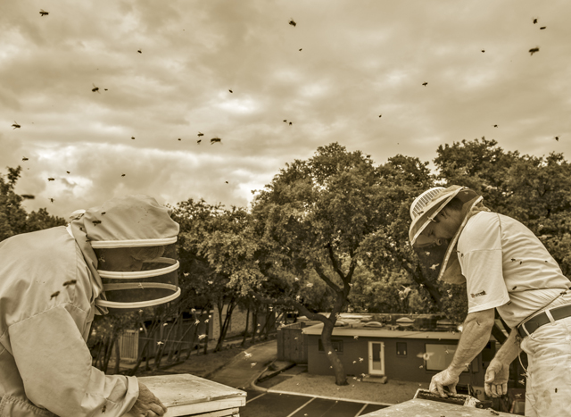 SUMMER SWARM Amid the buzz of new residents, Brandon and Susan Pollard finish installing hives on Corner Market's rooftop. Photo by Danny Fulgencio