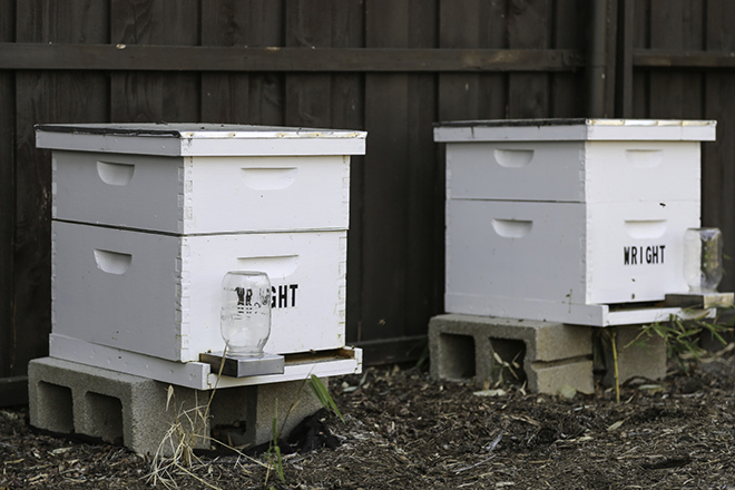 In addition to being a gardener, Wright also raises bees. He has bee boxes in the front and back yards that make enough honey for him to enjoy and share with his neighbors in Little Forest Hills. Photo by Jeanine Michna-Bales