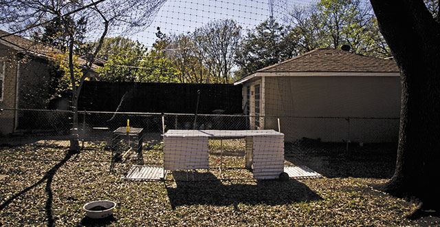 Bobby and Jean Bonds trapped their backyard to make it hawk proof.