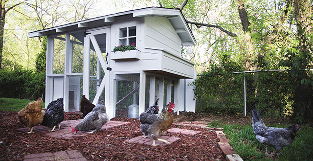 Neighbors Adam and Ursela Auensen built a chicken coop that's both aesthetically pleasing and hyper secure: Photos by David and Kim Leeson