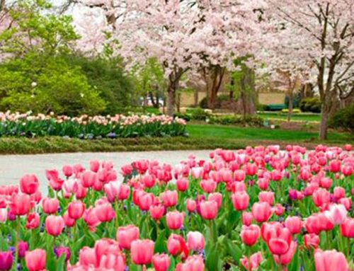 Catch spring fever at Dallas Blooms or check out these other events not to miss