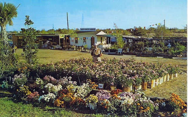 Ira Duncan was North Haven Gardens' original rosarian, pictured here in 1956 after selecting hundreds of blooms in Tyler, Texas, which were potted in old tin cans. (Courtesy of North Haven Gardens)