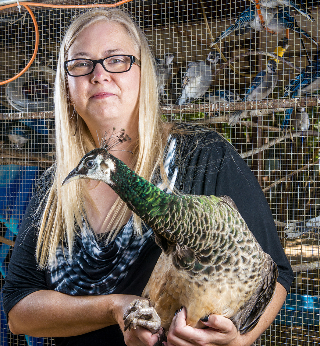 Leisl McQuillan has a heart for rescuing feathered friends. (Photos by Danny Fulgencio)