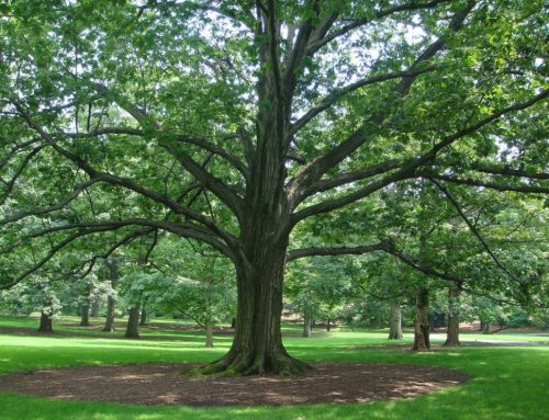 Love trees? Enter the Texas Trees Foundation photo contest
