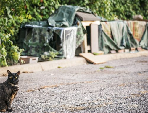 How Belmont Avenue's 'Cat Stalkers' spayed or neutered nearly 100% of a colony in a year