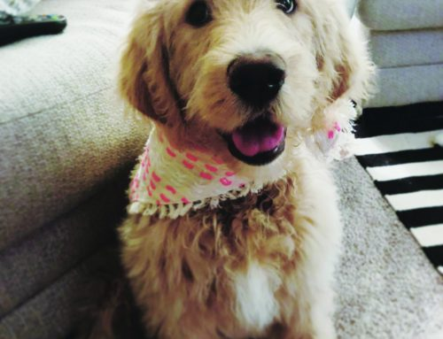 How miracle pup Honey-Biscuit survived after two emergency surgeries