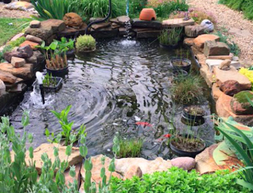 City pond tour flows into East Dallas with 2 backyard oases