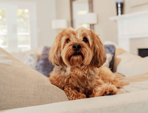Meet Bentley, the dog who can't be coaxed with treats